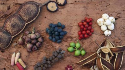 indigenous Australian ingredients and recipes
